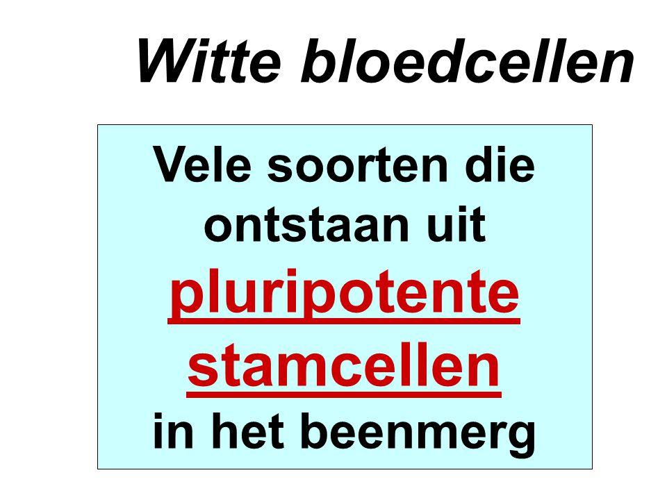 Witte bloedcellen pluripotente stamcellen
