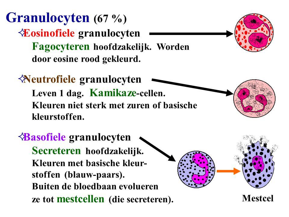 Eosinofiele granulocyten