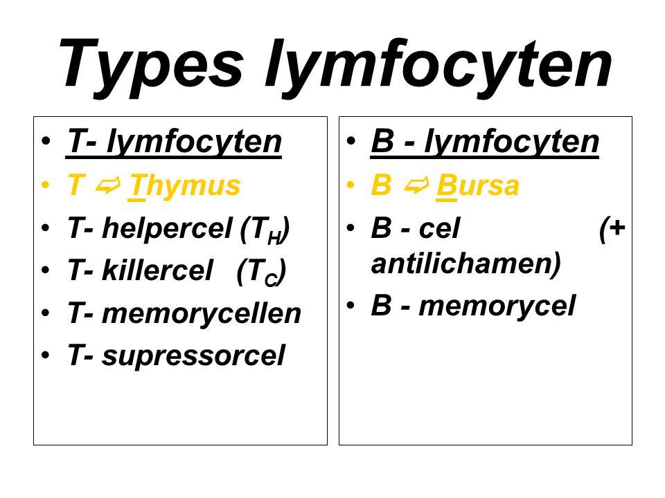 Types lymfocyten T- lymfocyten B - lymfocyten T  Thymus