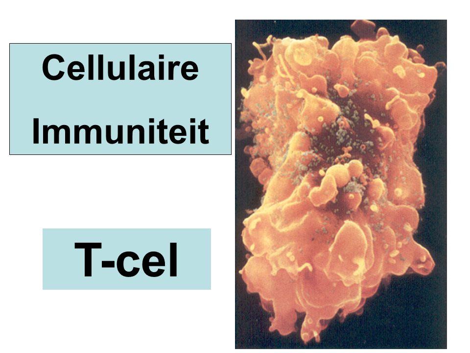 Cellulaire Immuniteit T-cel