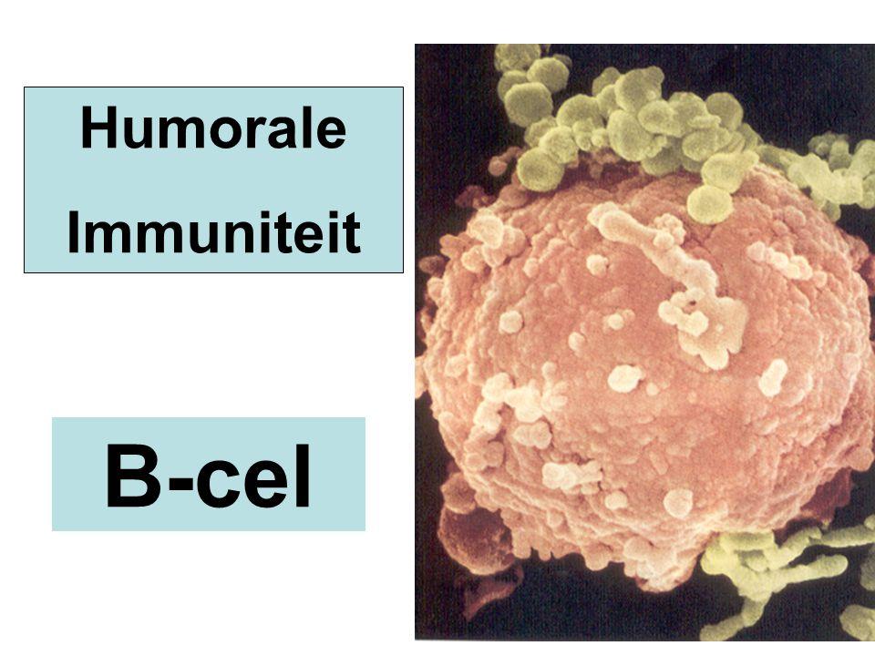 Humorale Immuniteit B-cel