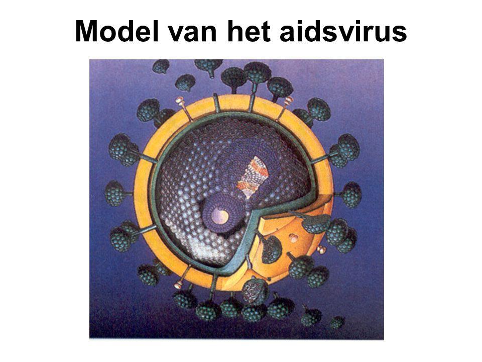 Model van het aidsvirus