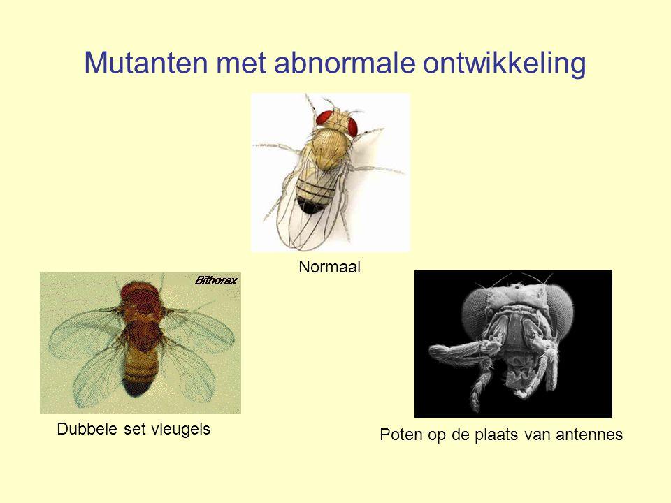 Mutanten met abnormale ontwikkeling