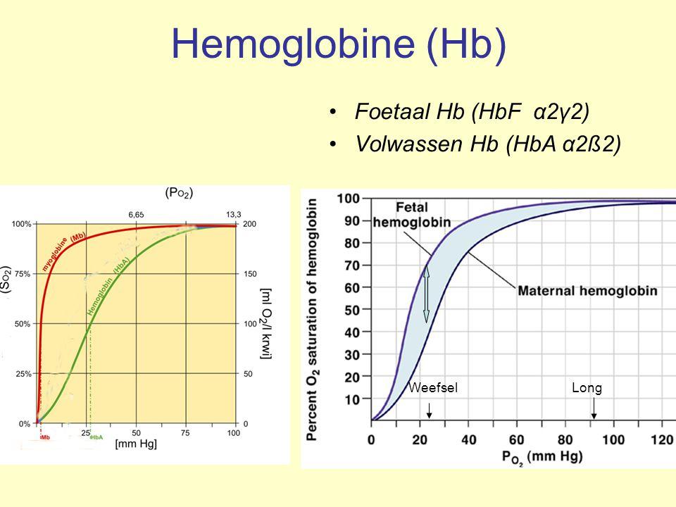Hemoglobine (Hb) Foetaal Hb (HbF α2γ2) Volwassen Hb (HbA α2ß2)