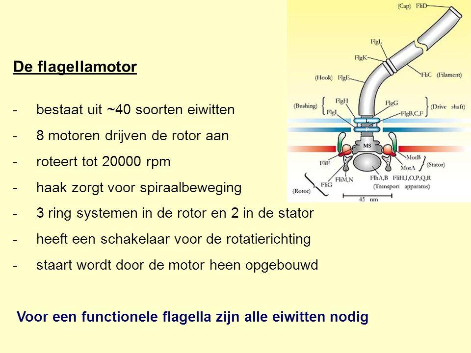 De flagellamotor bestaat uit ~40 soorten eiwitten