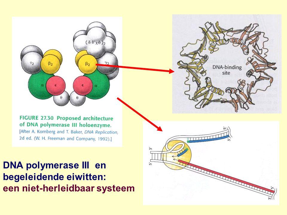 DNA polymerase III en begeleidende eiwitten: een niet-herleidbaar systeem