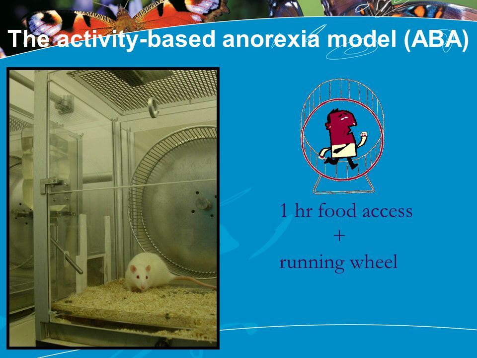 The activity-based anorexia model (ABA)