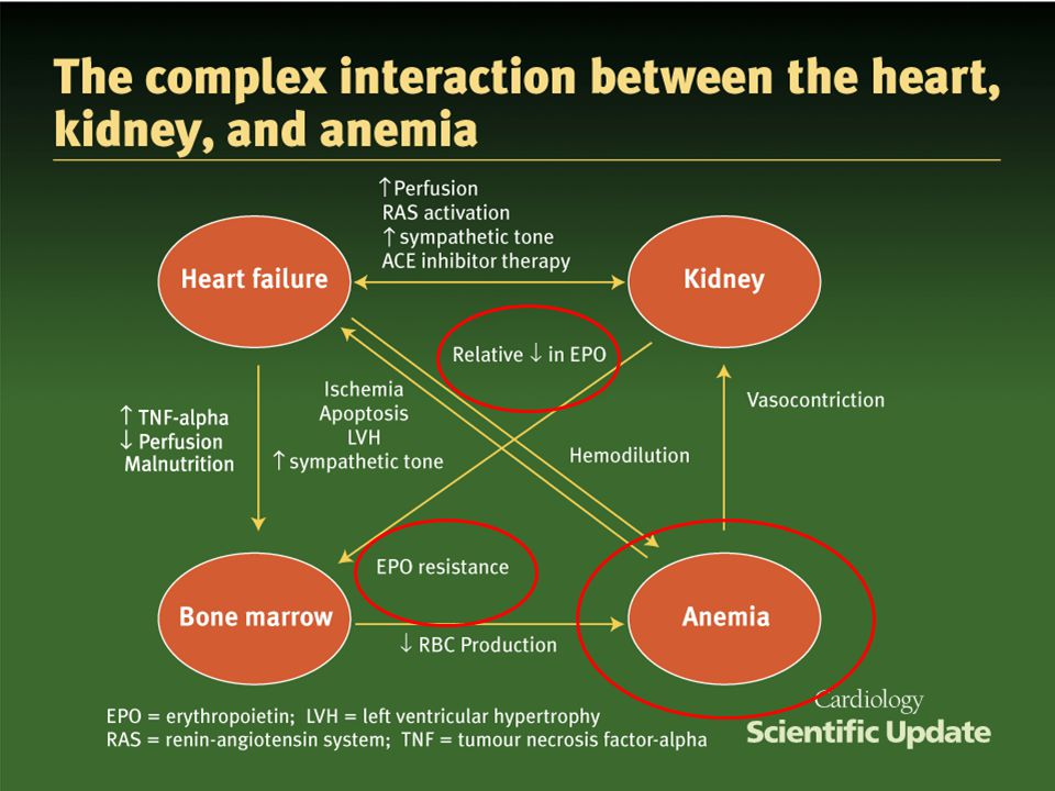 Anemia is a common finding in patients with chronic kidney and heart disease. Across the spectrum of heart and kidney disease, anemia is independently associated with an impaired quality of life, poor outcomes, reduced survival, a reduced exercise capacity, the development of left ventricular hypertrophy (LVH), and increased severity of heart failure. For both chronic kidney disease (CKD) and HF, deterioration in kidney and cardiac function, respectively, are accelerated by anemia. Diabetes appears to amplify both the adverse prognostic relationship and the severity of the anemia for any given degree of renal dysfunction. Consequently, anemia has been a target for therapy in the management of patients with heart and kidney disease.