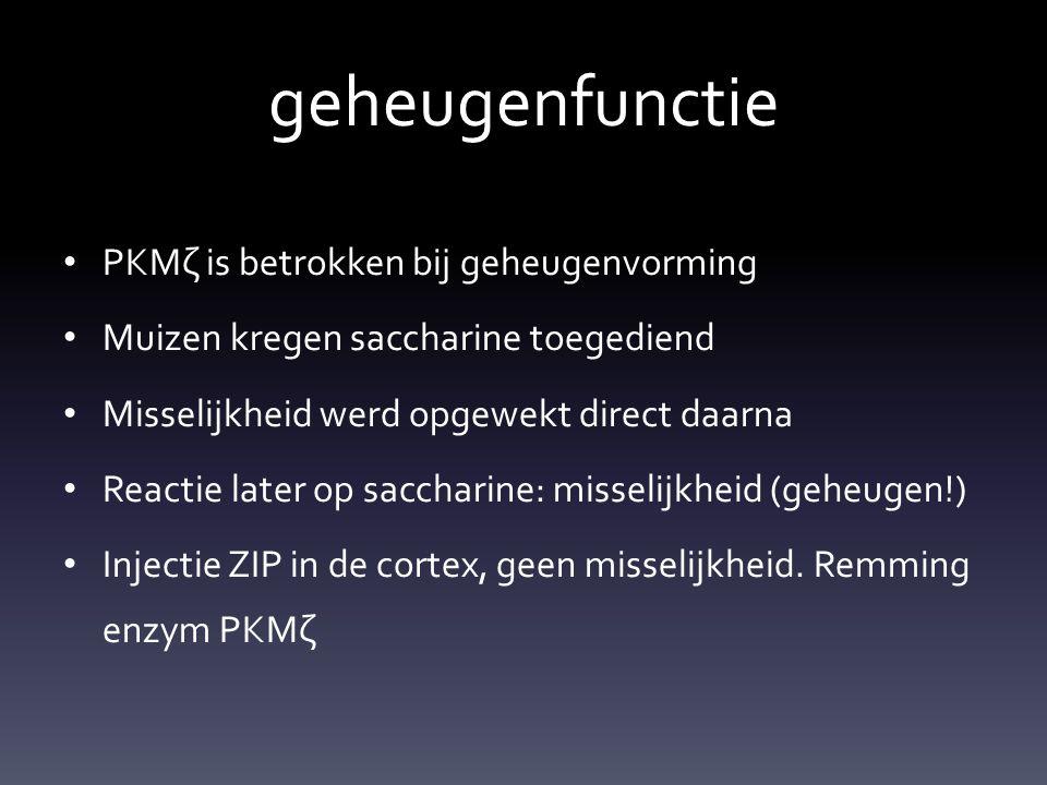 geheugenfunctie PKMζ is betrokken bij geheugenvorming