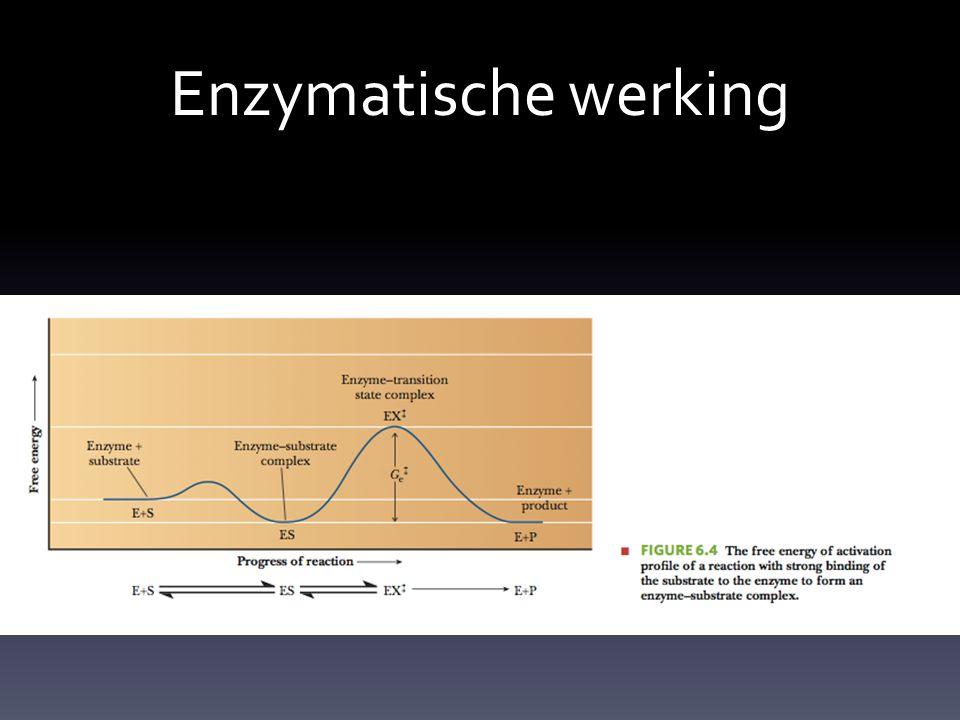 Enzymatische werking