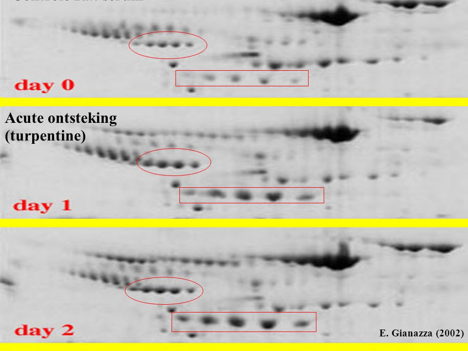 Controle Rat serum Acute ontsteking (turpentine) E. Gianazza (2002)