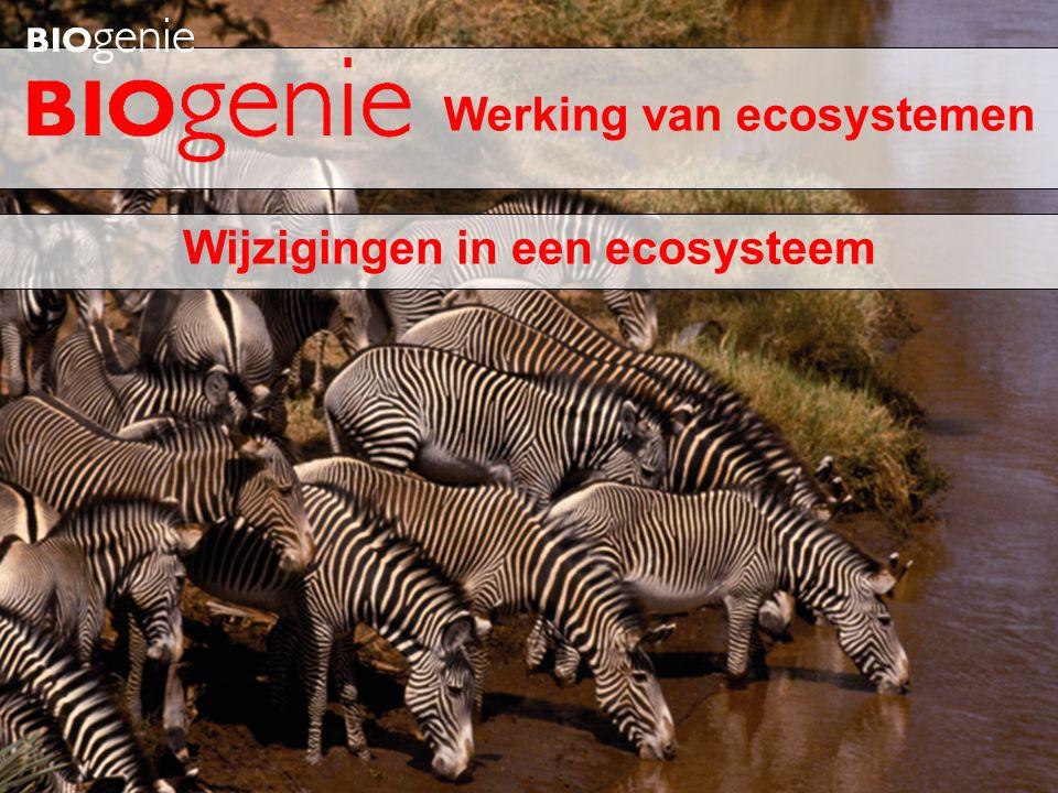 Werking van ecosystemen