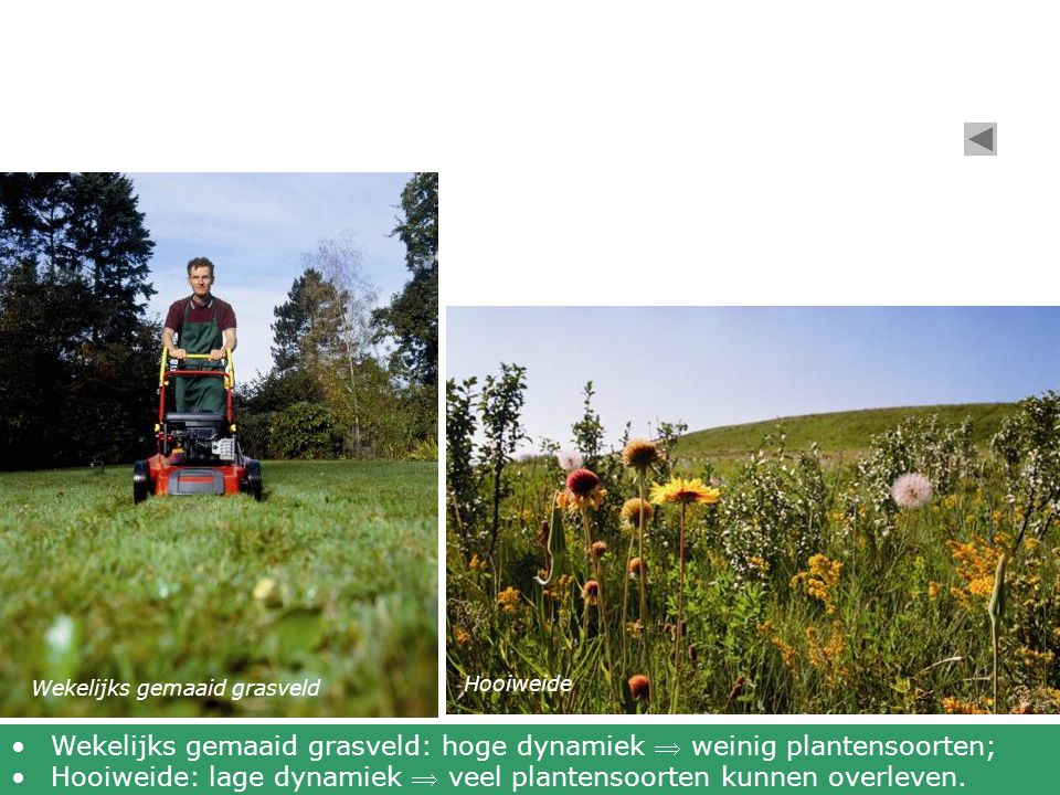 Wekelijks gemaaid grasveld: hoge dynamiek  weinig plantensoorten;