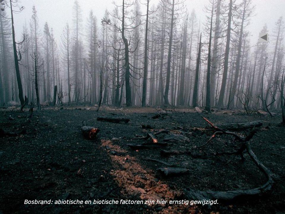 Bosbrand: abiotische en biotische factoren zijn hier ernstig gewijzigd.