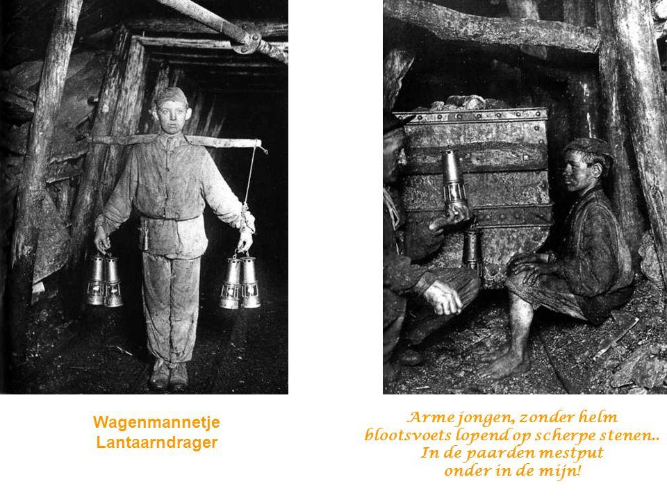 Wagenmannetje Lantaarndrager