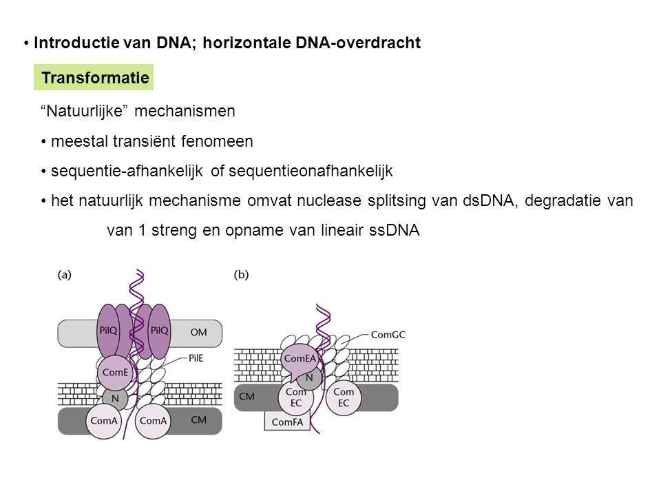 Introductie van DNA; horizontale DNA-overdracht