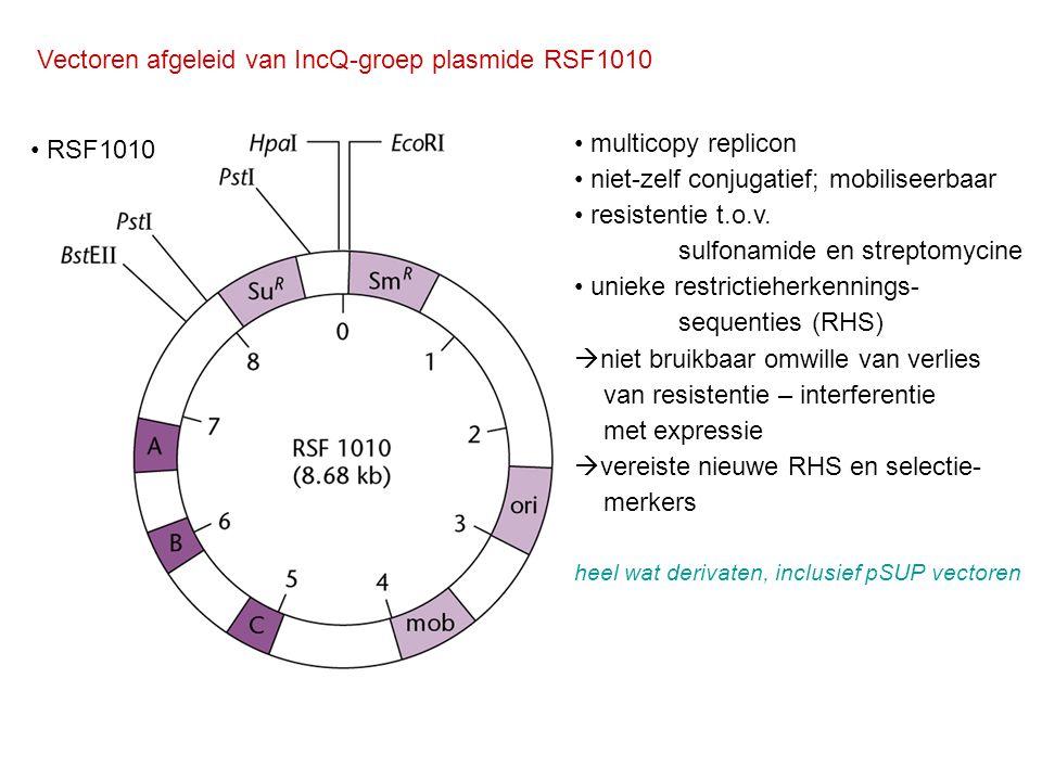 Vectoren afgeleid van IncQ-groep plasmide RSF1010