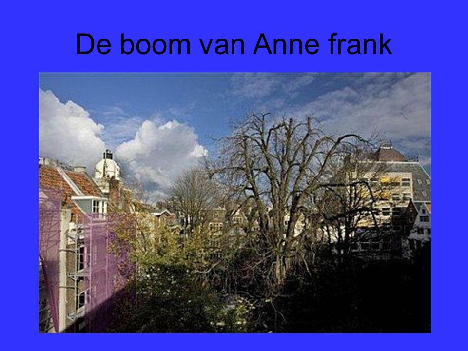 De boom van Anne frank