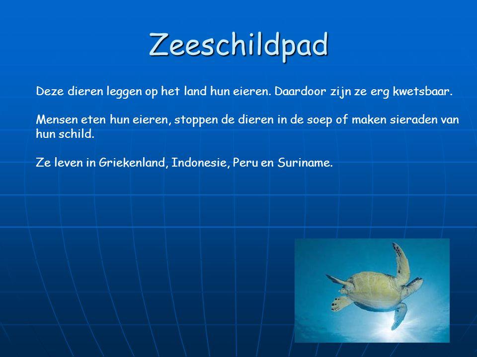 Zeeschildpad Deze dieren leggen op het land hun eieren. Daardoor zijn ze erg kwetsbaar.
