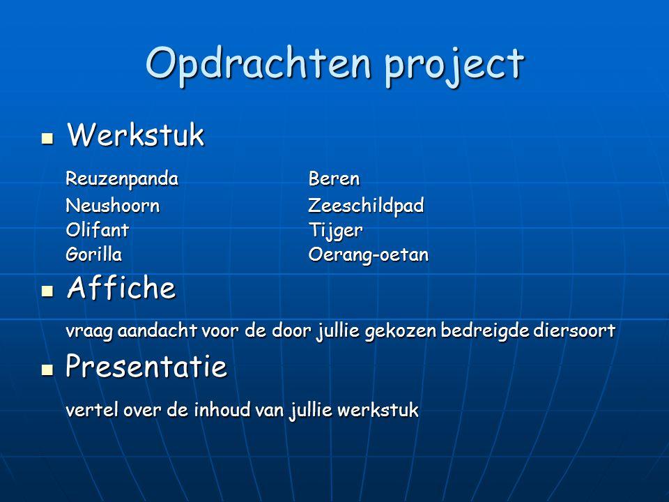 Opdrachten project Werkstuk Reuzenpanda Beren Affiche