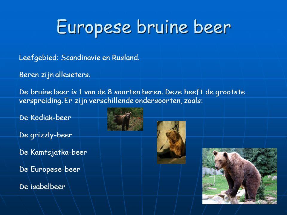 Europese bruine beer Leefgebied: Scandinavie en Rusland.