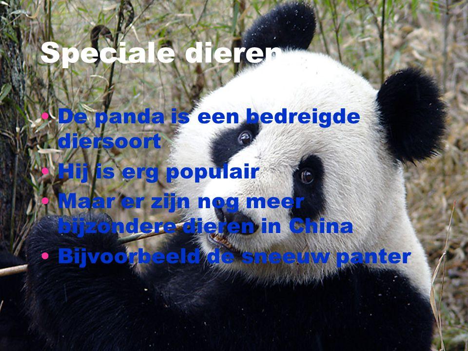 Speciale dieren De panda is een bedreigde diersoort