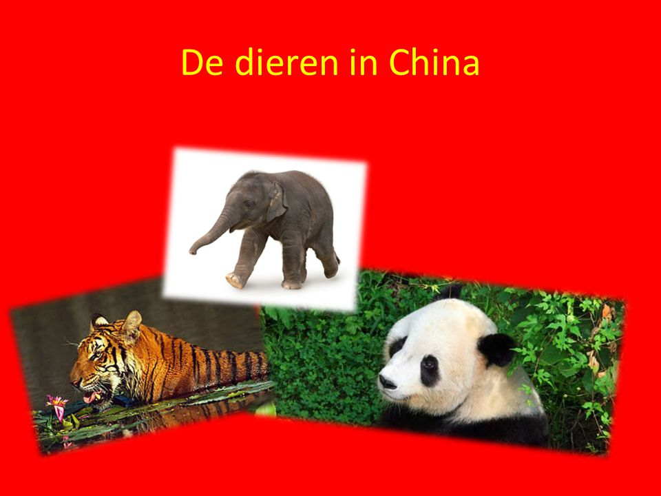 De dieren in China