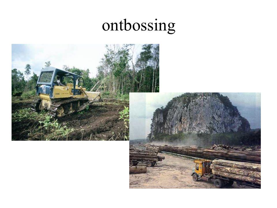 ontbossing