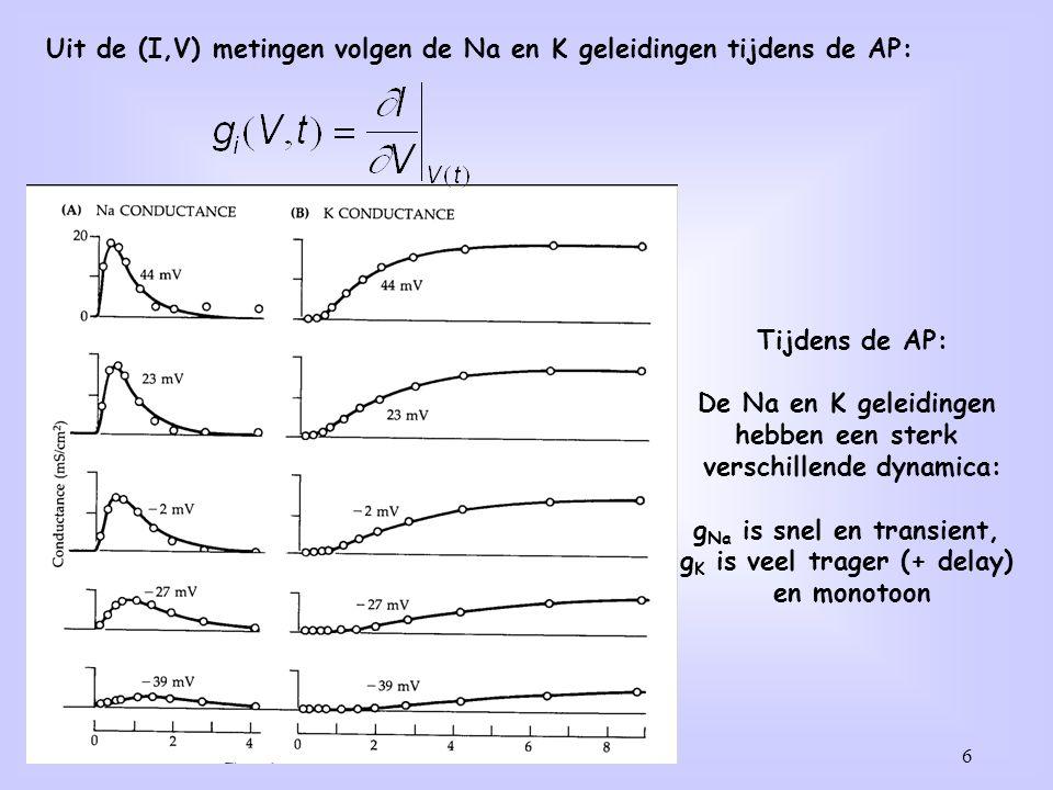 Uit de (I,V) metingen volgen de Na en K geleidingen tijdens de AP: