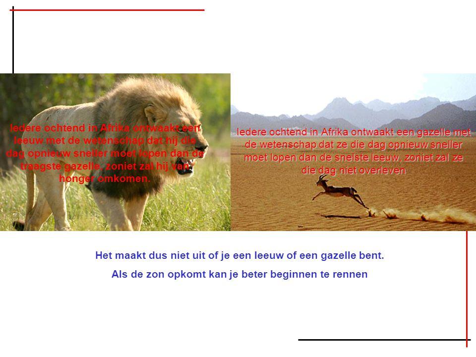 Het maakt dus niet uit of je een leeuw of een gazelle bent.