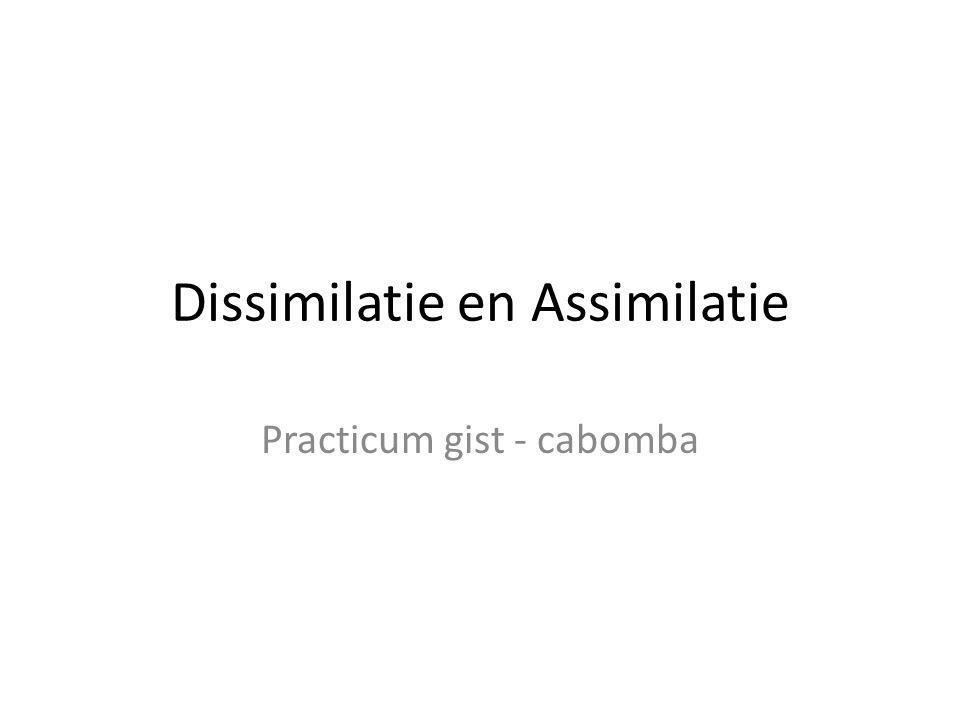 Dissimilatie en Assimilatie