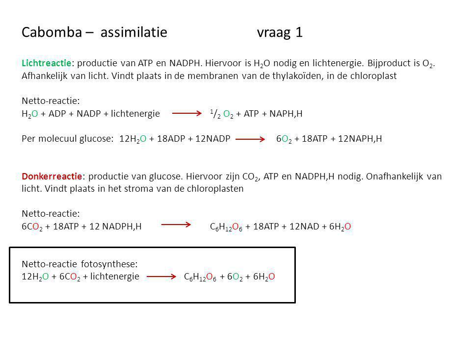 Cabomba – assimilatie vraag 1