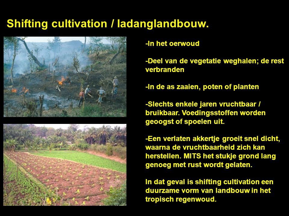 Shifting cultivation / ladanglandbouw.