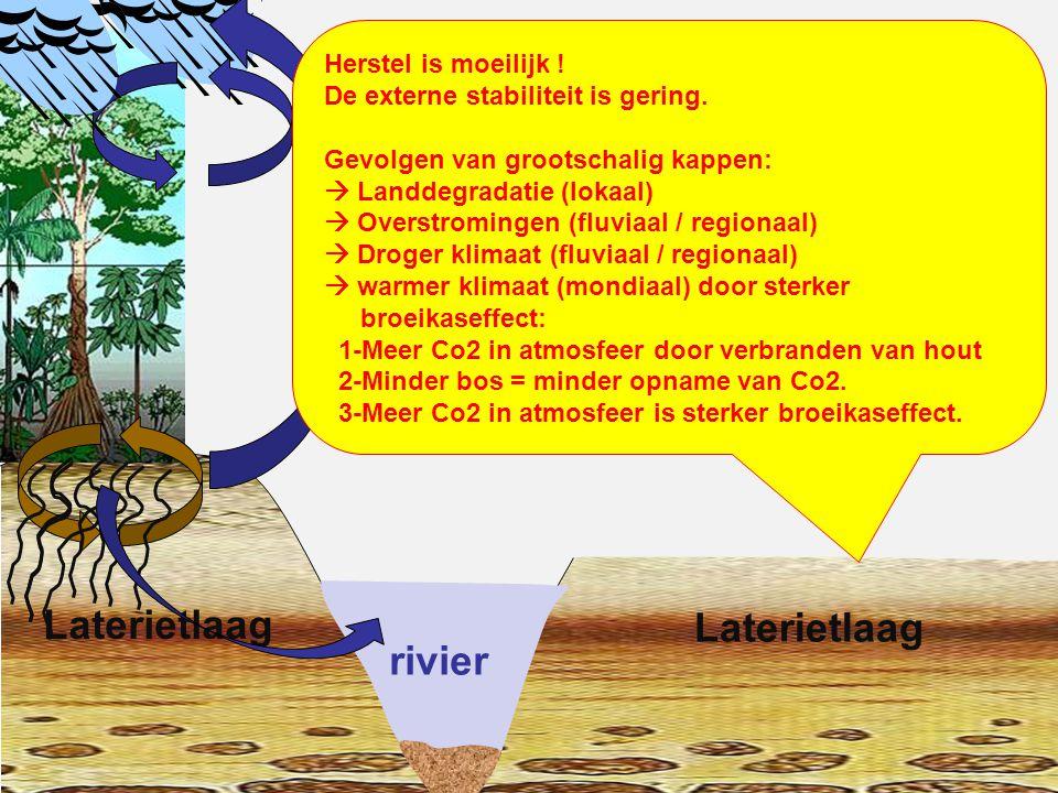rivier Laterietlaag Laterietlaag Herstel is moeilijk !