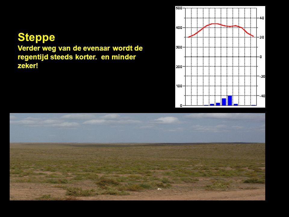 Steppe Verder weg van de evenaar wordt de regentijd steeds korter. en minder zeker!