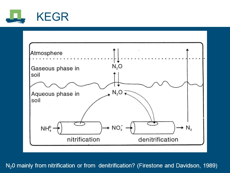 KEGR N20 mainly from nitrification or from denitrification (Firestone and Davidson, 1989) 2