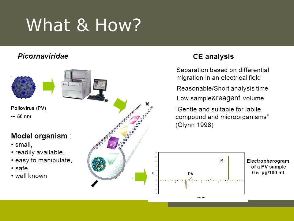 What & How - + - Picornaviridae CE analysis  50 nm Model organism :