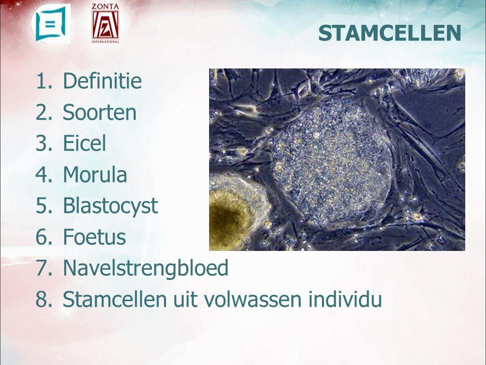 Stamcellen uit volwassen individu