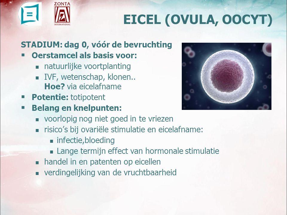 EICEL (OVULA, OOCYT) STADIUM: dag 0, vóór de bevruchting