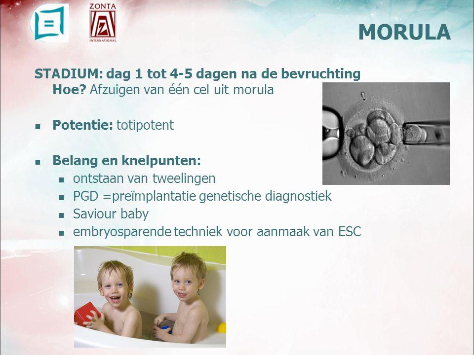 MORULA STADIUM: dag 1 tot 4-5 dagen na de bevruchting Hoe Afzuigen van één cel uit morula. Potentie: totipotent.