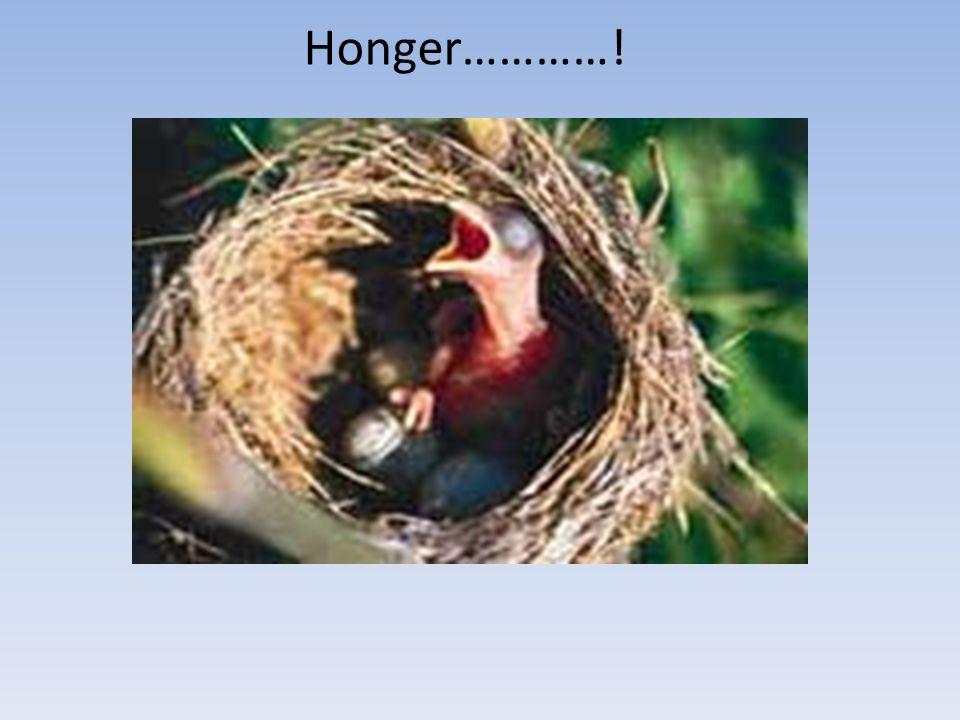 Honger…………!