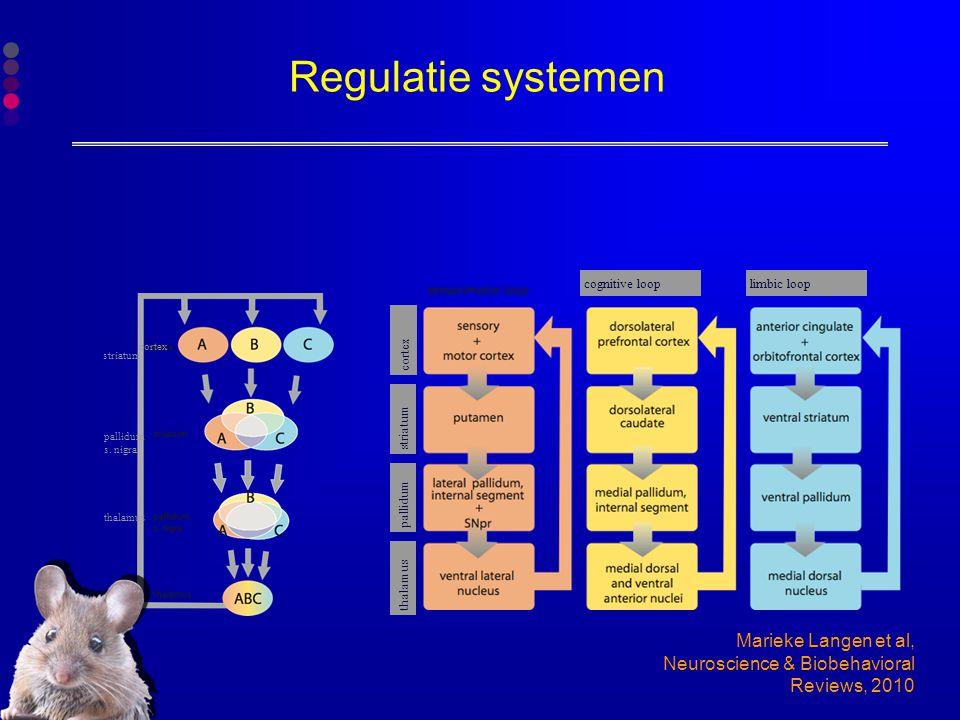 Regulatie systemen cognitive loop. limbic loop. thalamus. pallidum. striatum. cortex. cortex.