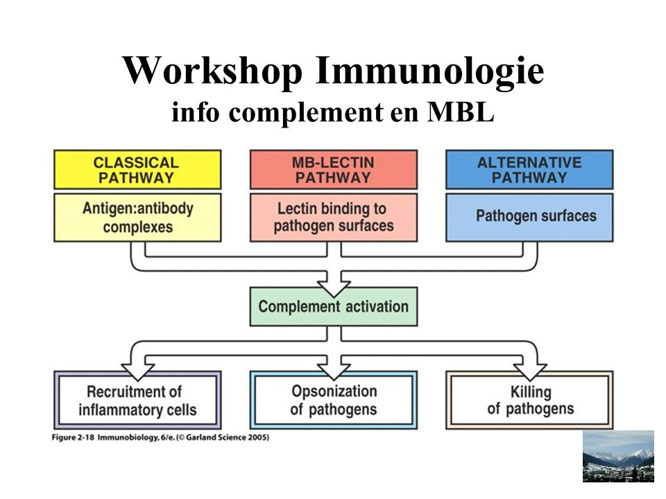 Workshop Immunologie info complement en MBL