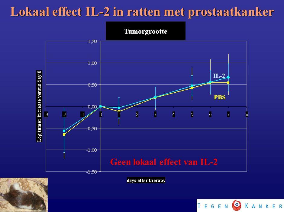 Lokaal effect IL-2 in ratten met prostaatkanker