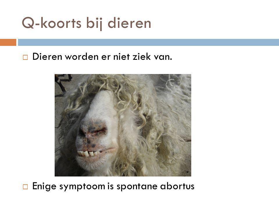 Q-koorts bij dieren Dieren worden er niet ziek van.