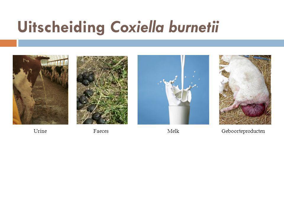 Uitscheiding Coxiella burnetii