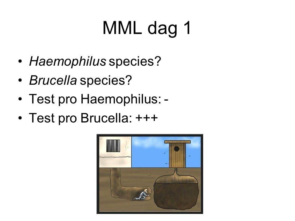 MML dag 1 Haemophilus species Brucella species