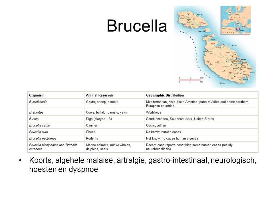 Brucella Koorts, algehele malaise, artralgie, gastro-intestinaal, neurologisch, hoesten en dyspnoe
