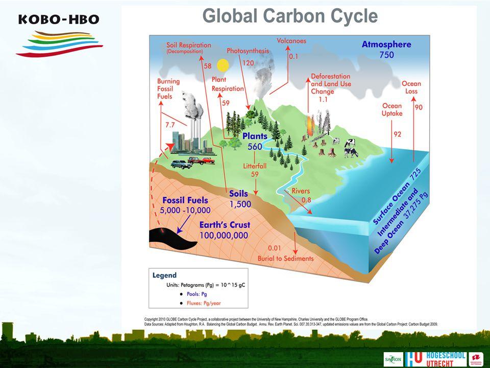 Deze figuur brengt enkele belangrijke elementen uit de wereldwijde koolstofcyclus samen, en laat het belang van de bodem en planten als opslagplek van koolstof zien. De blauwe getallen geven een schatting van de voorraden (in Petagram = 10 tot de macht 15; 1 miljard ton); de rode getallen geven de jaarlijkste stromen aan in Petagram per jaar. De atmosfeer bevat nu naar schatting 750 Pg koolstof, alle planten op aarde een hoeveelheid in de zelfde ordegrootte (560 Pg), en de bodem zelfs het dubbele van de atmosfeer (1500 Pg). Zoals te zien zijn aanzienlijke wereldwijde stromen gekoppeld aan fotosynthese (het vastleggen van koolstof in planten), plant respiratie (het uitademen van CO2 door planten) en bodemrespiratie (afbraak van organische stof uit de bodem). Het kwetsbare evenwicht tussen al deze stromen is op dit moment licht verstoord, wat leidt tot een langzame toename van de hoeveelheid CO2 in de lucht. Het is duidelijk dat omvangrijke veranderingen in de bodem (bijvoorbeeld versnelde afbraak van veengronden of het vrijkomen van methaan uit permafrostgebieden) de balans tussen het vastleggen van koolstof en het vrijkomen van CO2 verder kan verstoren.