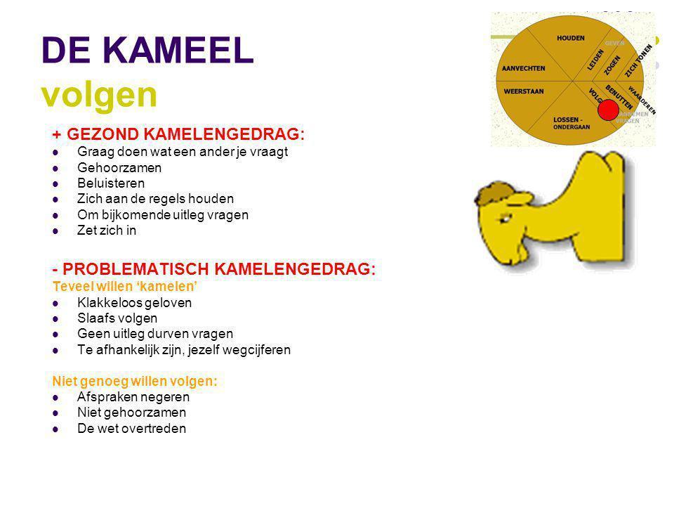DE KAMEEL volgen + GEZOND KAMELENGEDRAG: